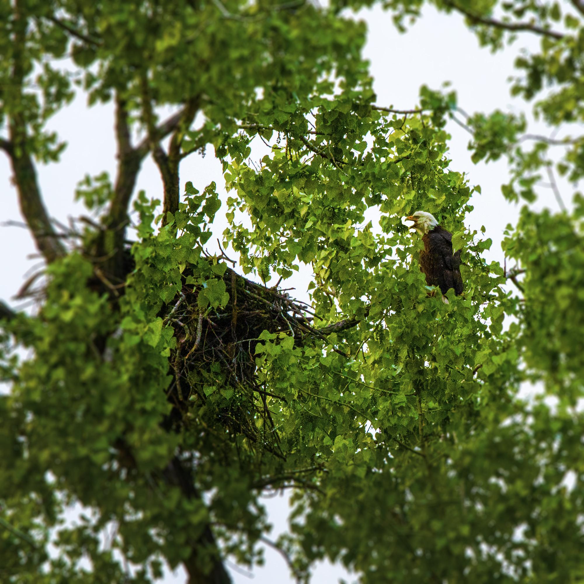 Eagle Nest Apartments: Cedar-Riverside Neighborhood Attractions
